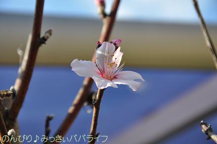 sakurakaika201606.jpg