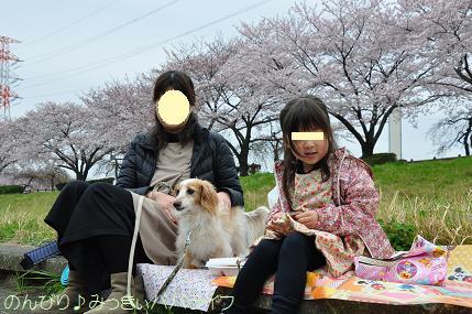 sakuramankai2016040206.jpg