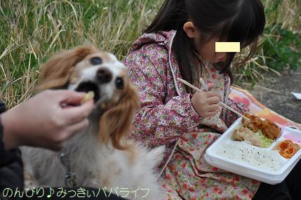 sakuramankai2016040207.jpg