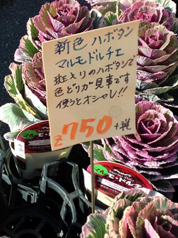 IMG_4356-20151115.jpg
