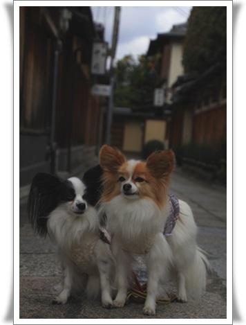 京都6032510