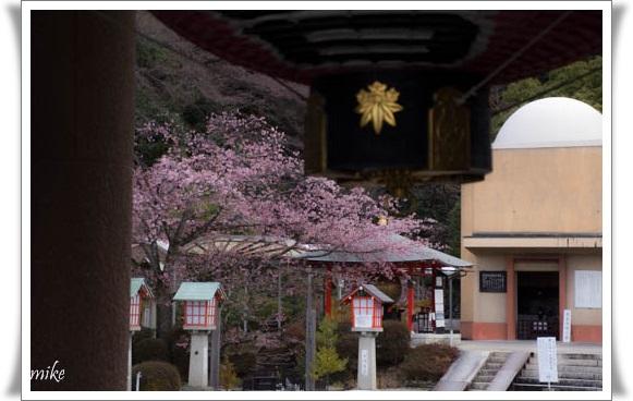 京都603257