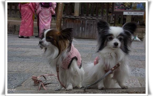 京都603255
