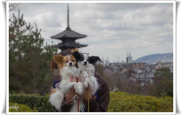 京都603254
