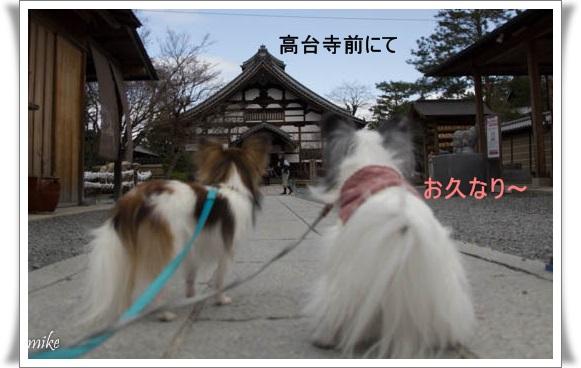 京都603252