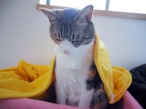 みく毛布掛け