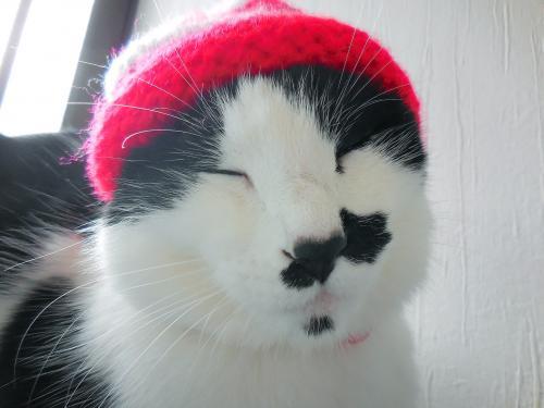 くぅぶちゃいく帽子