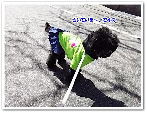 DSC_6224 (450x338)