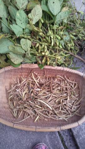 小豆と黒豆