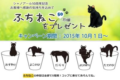 cats_20151011141446fc1.jpg