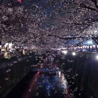 16-0401中目黒の桜満開