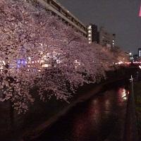 16-0401中目黒の桜満開2