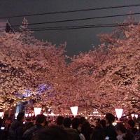 16-0401中目黒の桜満開3