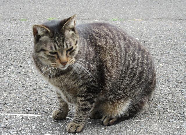 何かの気配を感じてる猫 28.3.17