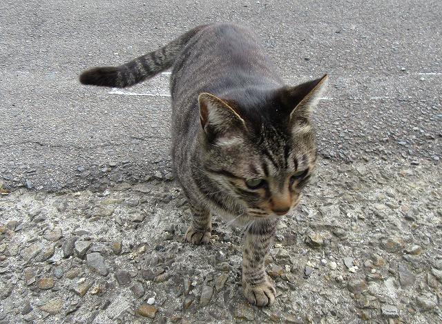 歩き出した猫 28.3.17