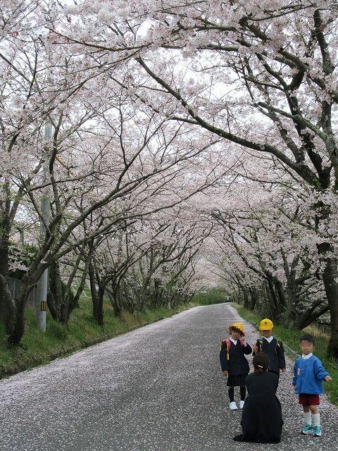 最後の桜かな 28.4.10