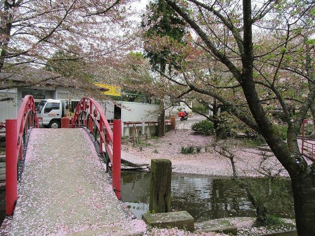 朝日山散る花びら 28.4.10