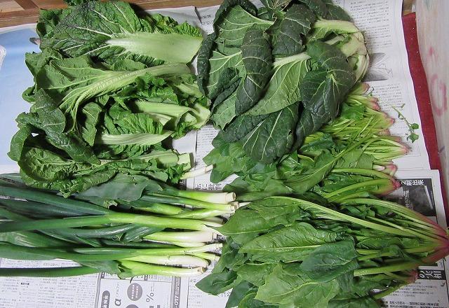 野菜いっぱい 28.3.24