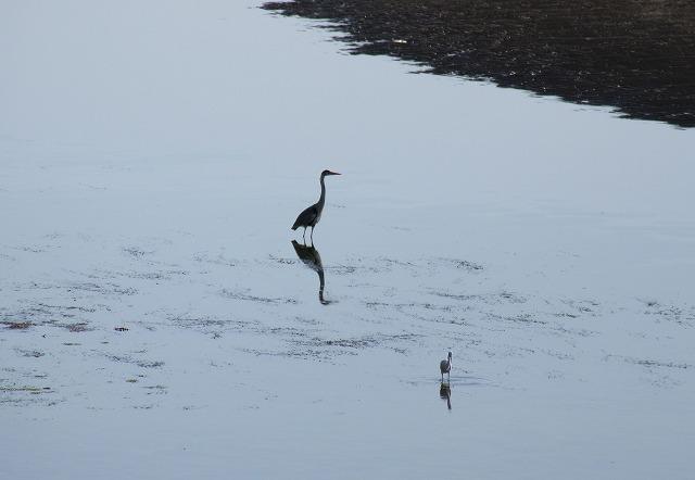鳥たちも砂浜で 28.3.21