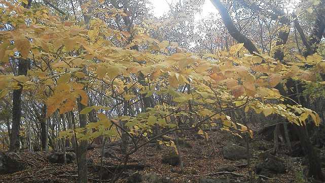 F1000462 黄葉が残っています