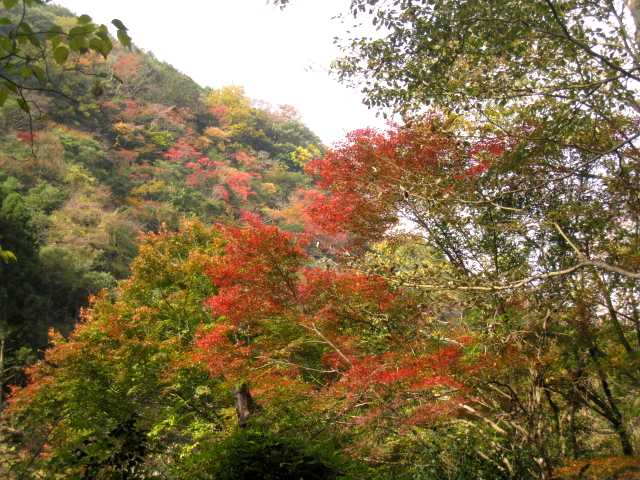 IMG_0012 登山道の紅葉