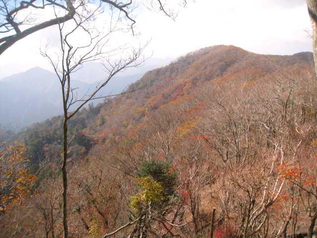 IMG_0047紅葉の 斜面