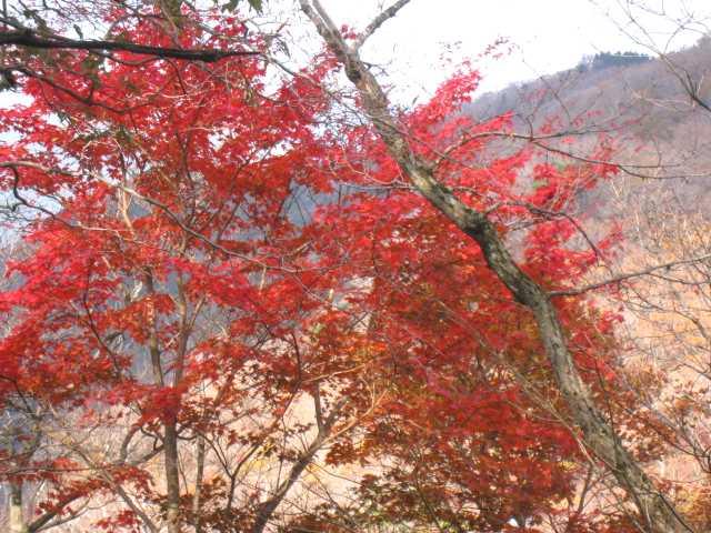 IMG_0074 求菩提山道の紅葉  1