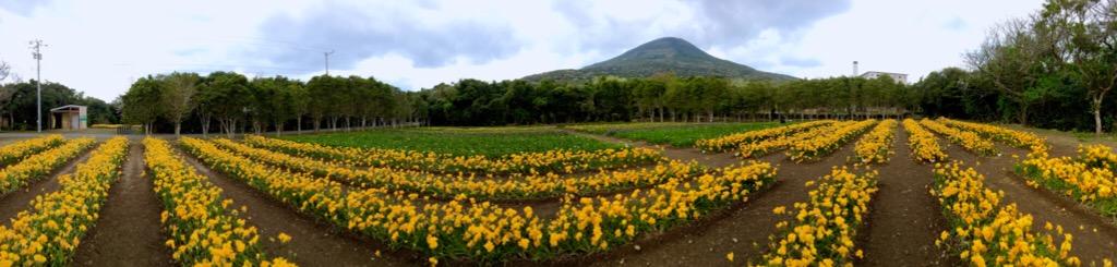 フリージア畑(o^^o)