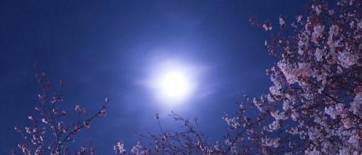 夜桜112・4・5