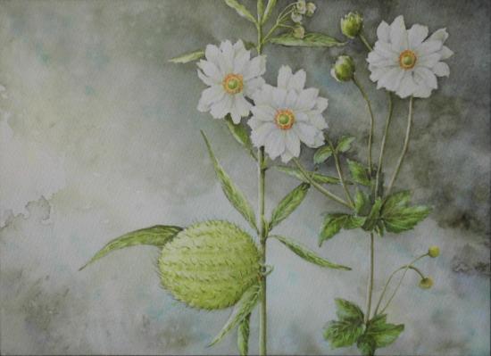 秋明菊とフウセントウワタ 1510