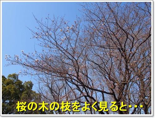 20160326_018.jpg