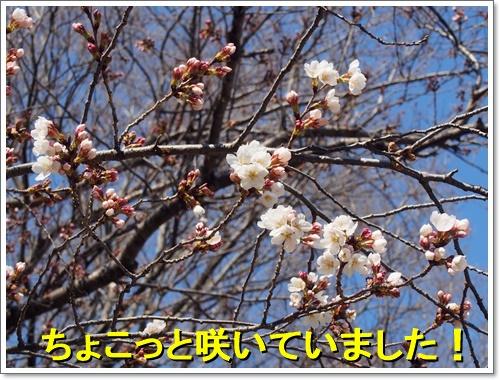 20160326_021.jpg