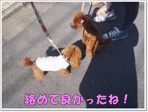 20160326_077.jpg