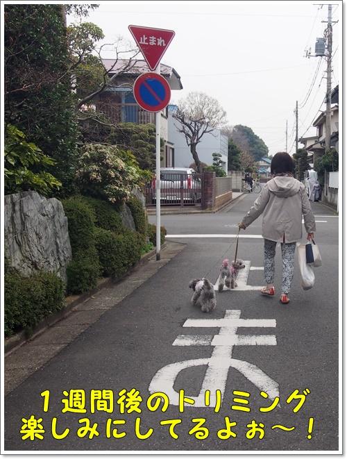 20160330_031.jpg