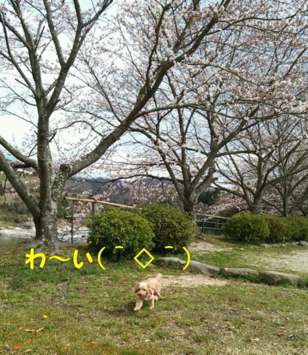DSC_3015A.jpg