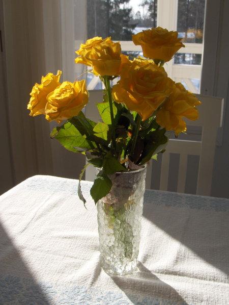 黄色 バラ Keltainen Ruusu