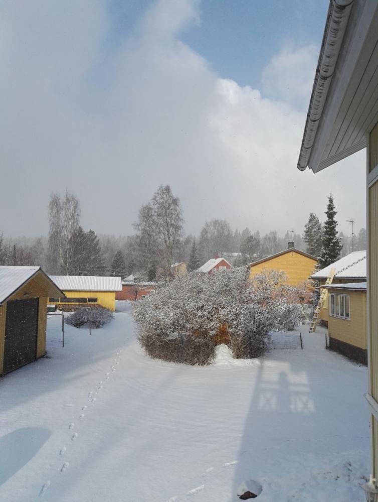 Lumi 雪 フィンランド南部 3月