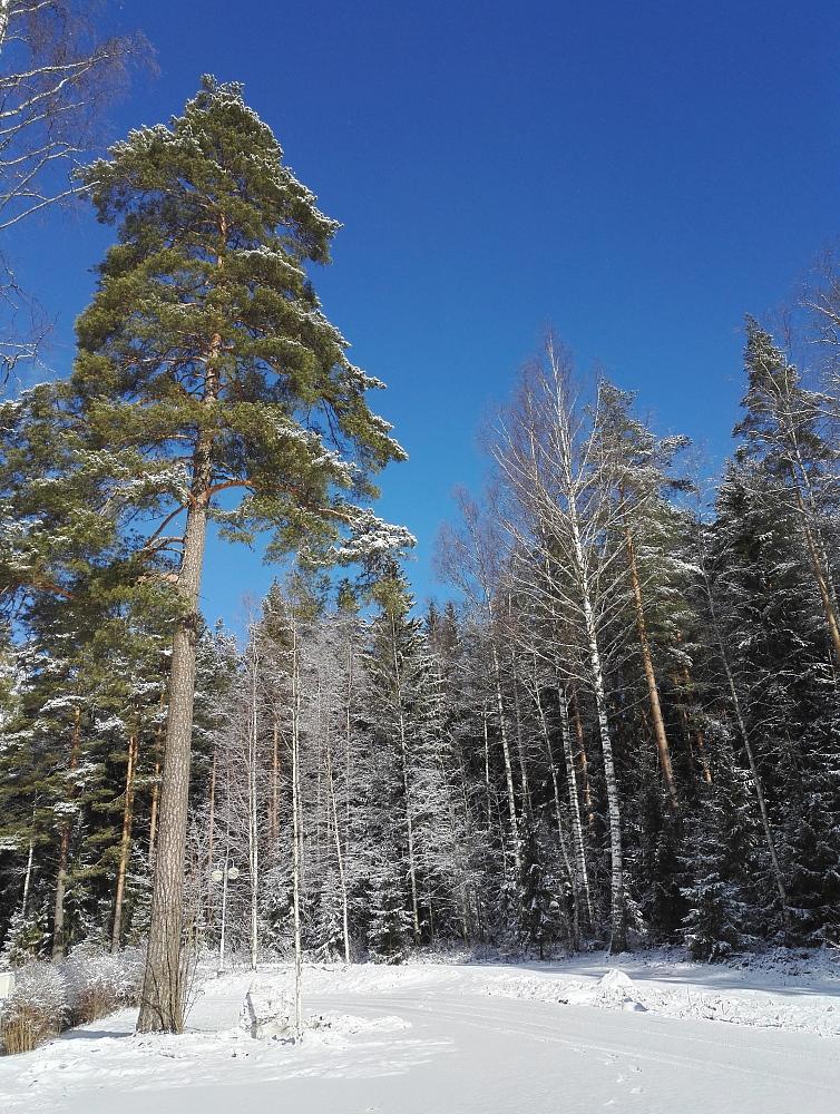 フィンランド 3月 雪 青空