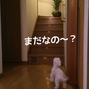 151110_7.jpg