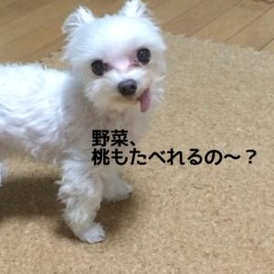 151111_7.jpg