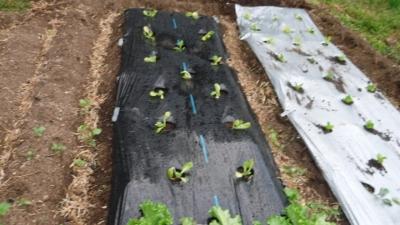 2015.10.9菜園4