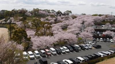 2016.4.2桜2