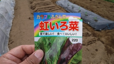 2016.4.2種まき2