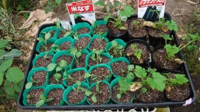 2016.4.10菜園6