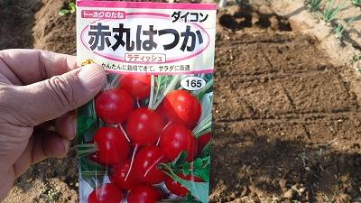 2015.10.11菜園27