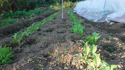 2015.10.25菜園