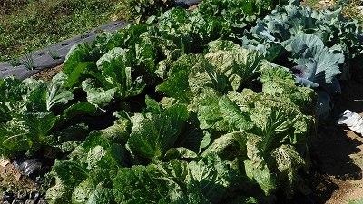 2015.10.25菜園21