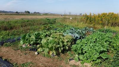 2015.10.31菜園27