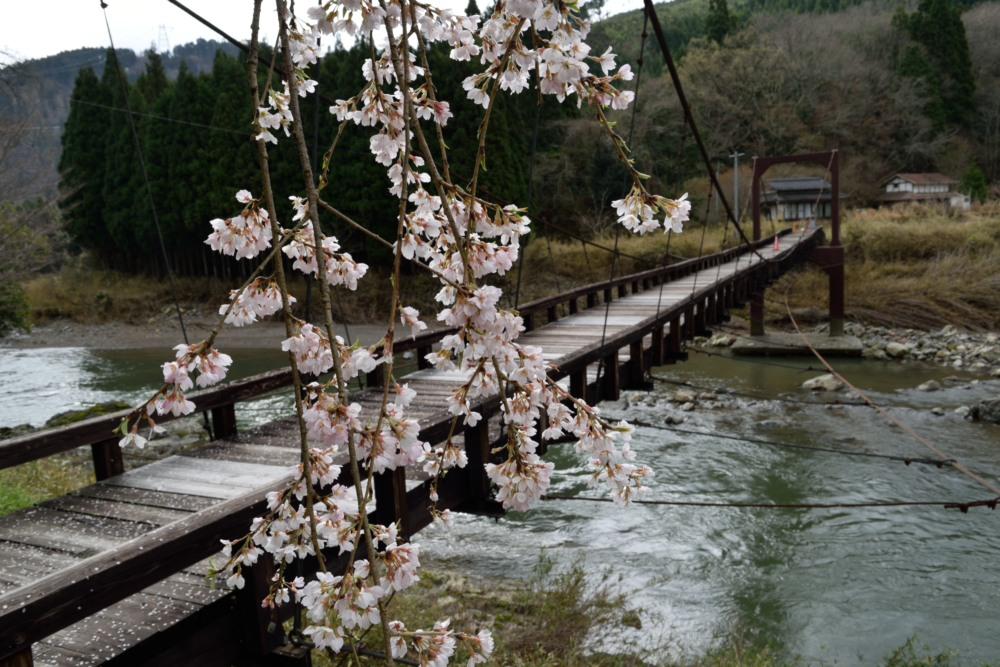DSC_7030_魚ヶ渕吊り橋の桜DSC_7030
