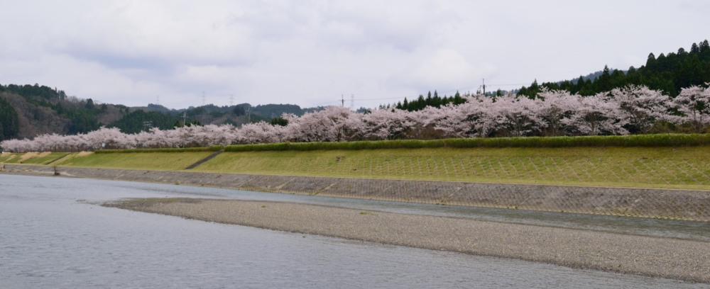 DSC_7507_栃本の百本桜DSC_7507